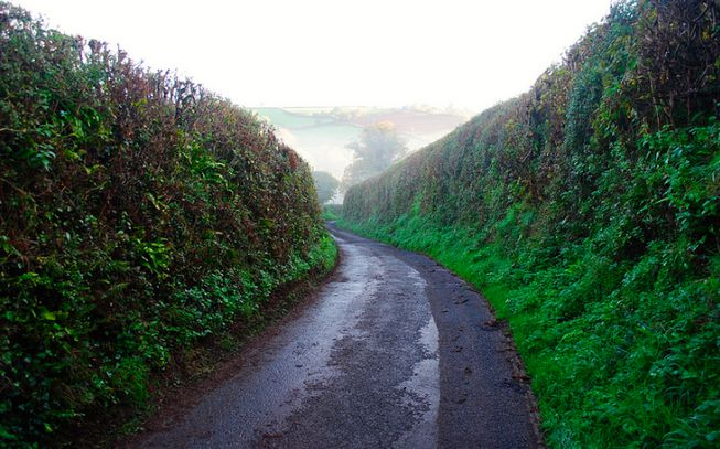 Hedgerow in British countryside